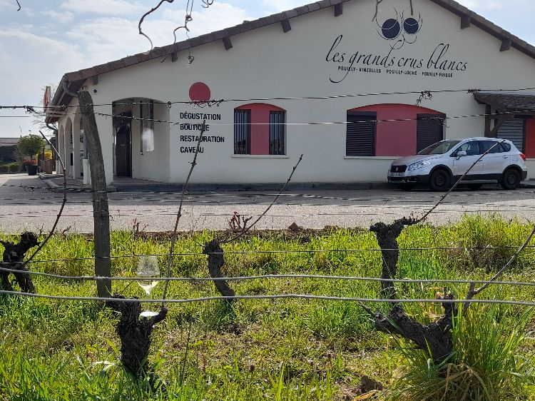 Coopérative vins Vinzelles